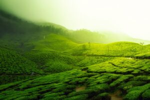 主な3つの紅茶の製法